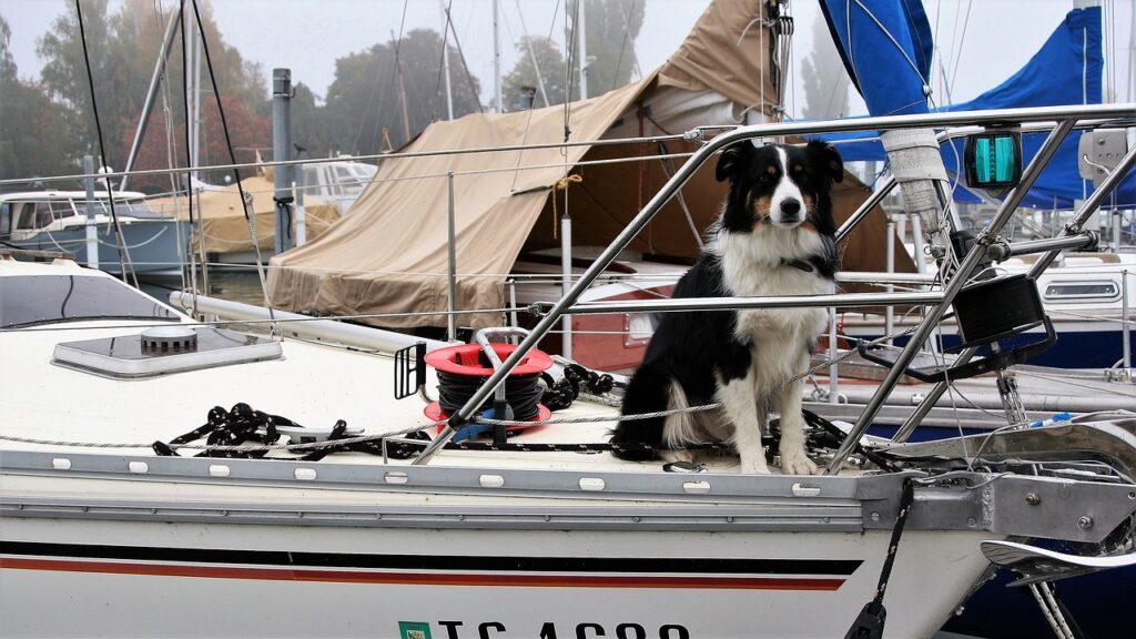 dog, thoroughbred, sailboat