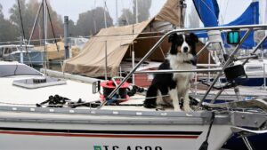 dog, thoroughbred, sailboat